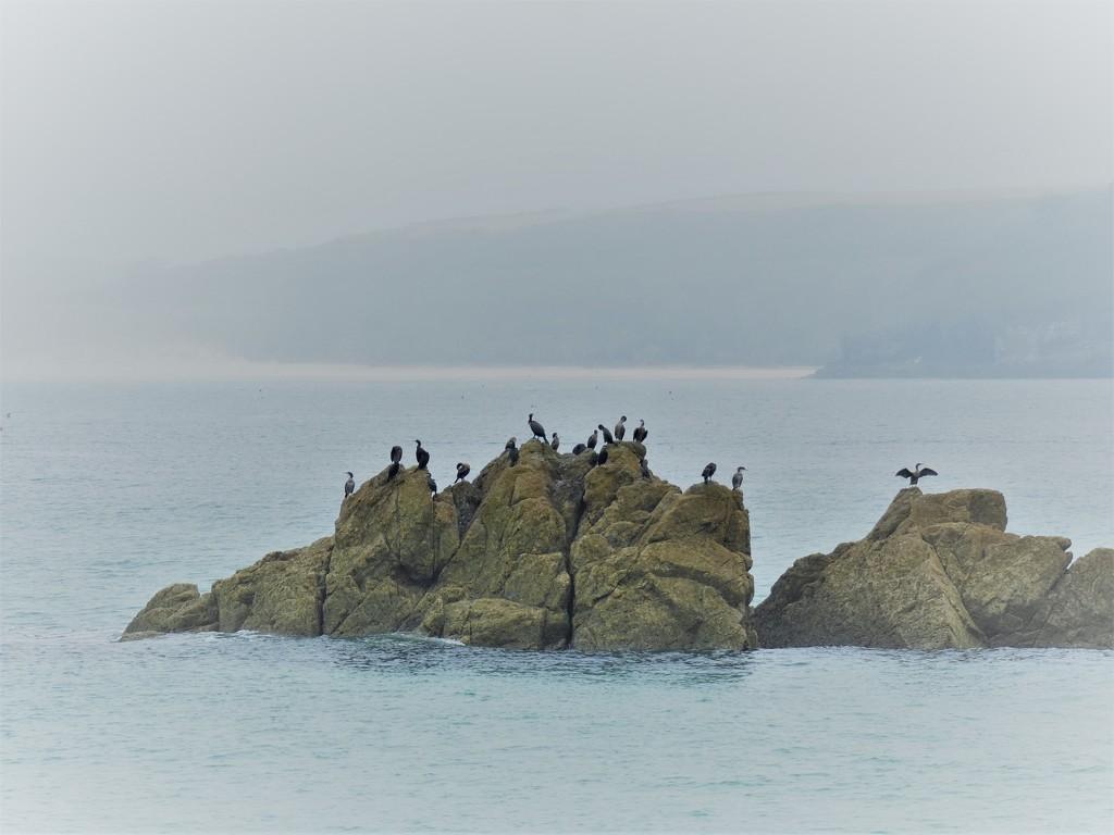 Cormorants in the mist by julienne1