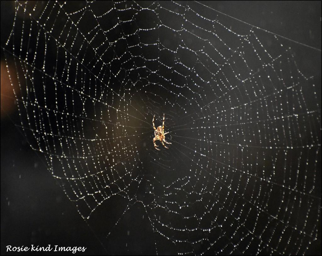 RK2_5699 A dewy web by rosiekind