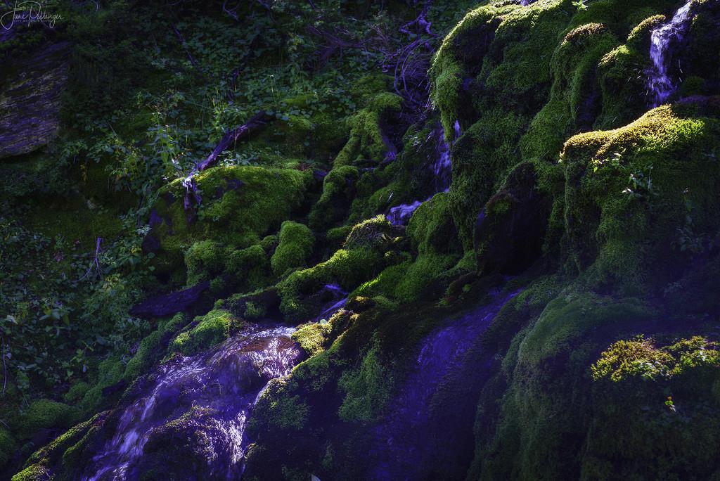 Luscious Moss by jgpittenger