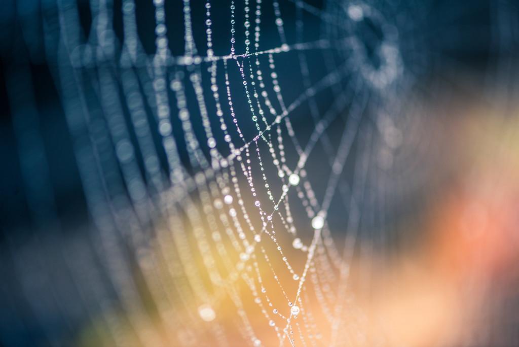 Web by kwind