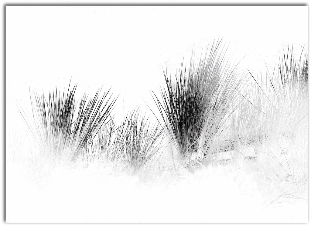 Reeds.. by robz