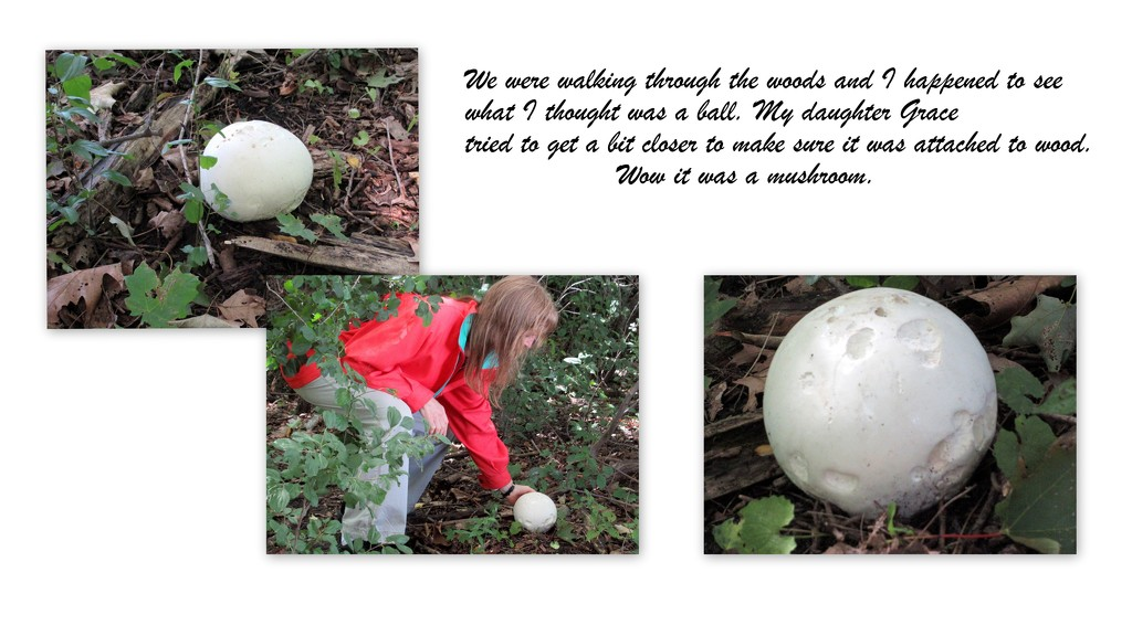 Found a mushroom in the woods by bruni