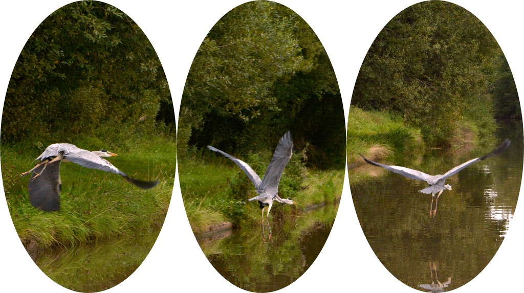 Heron collage by ziggy77