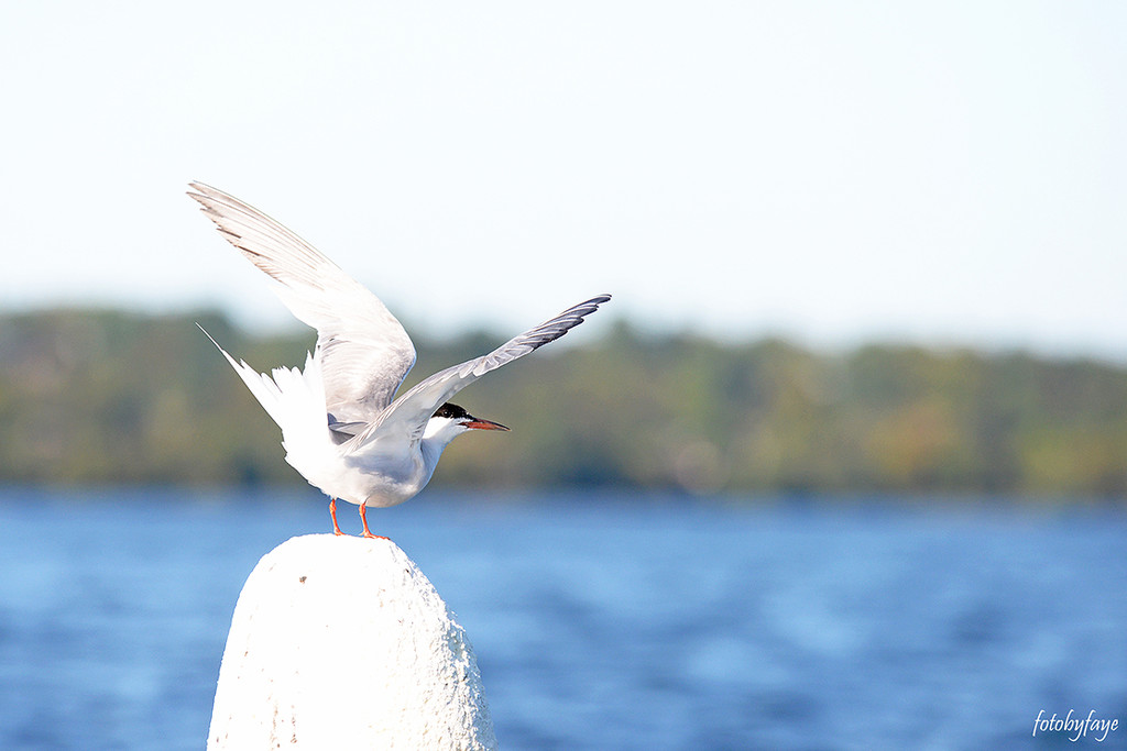 Balancing Act! by fayefaye