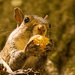 Squirrel With It's Snack! by rickster549