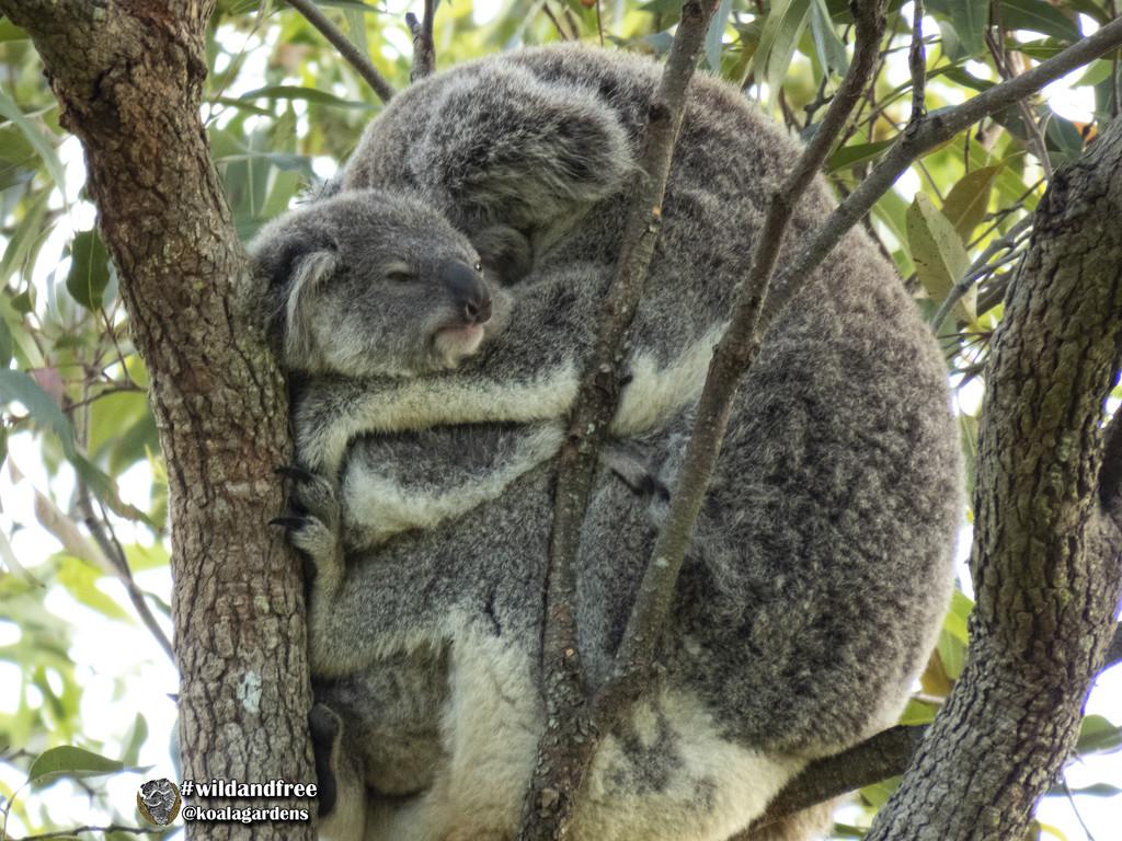 joey fest by koalagardens