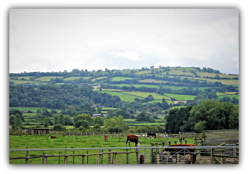 The  Welsh country side  by beryl