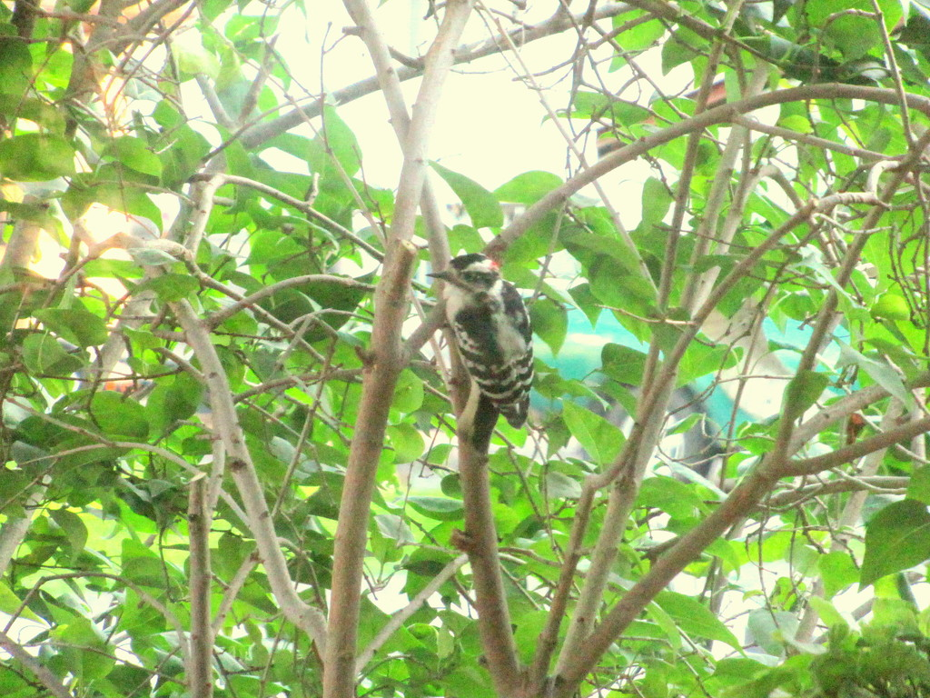 This little woodpecker told me so by bruni
