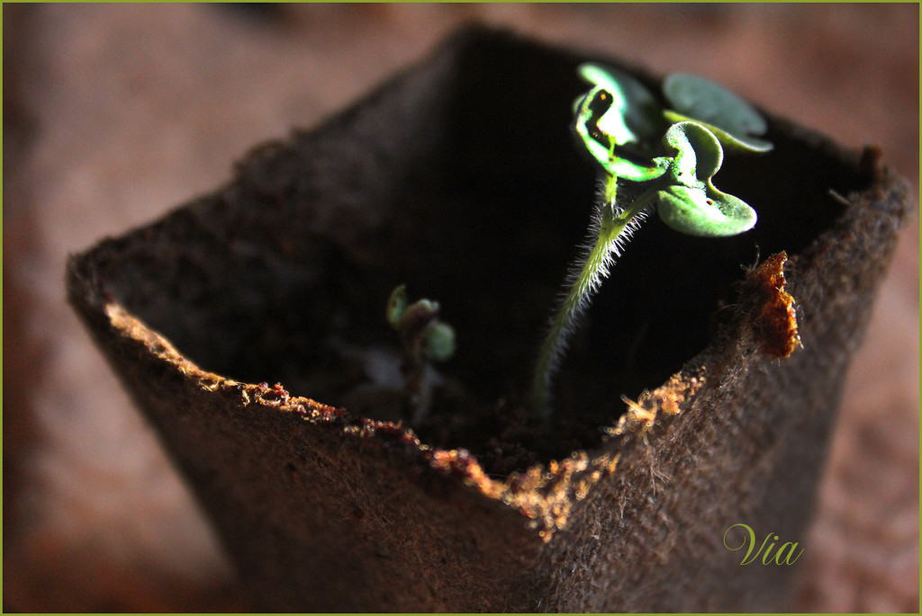 New life... by sdutoit