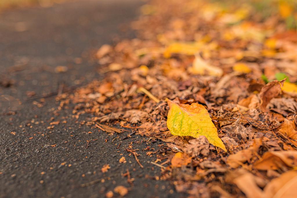 Autumn has arrived by mamazuzi