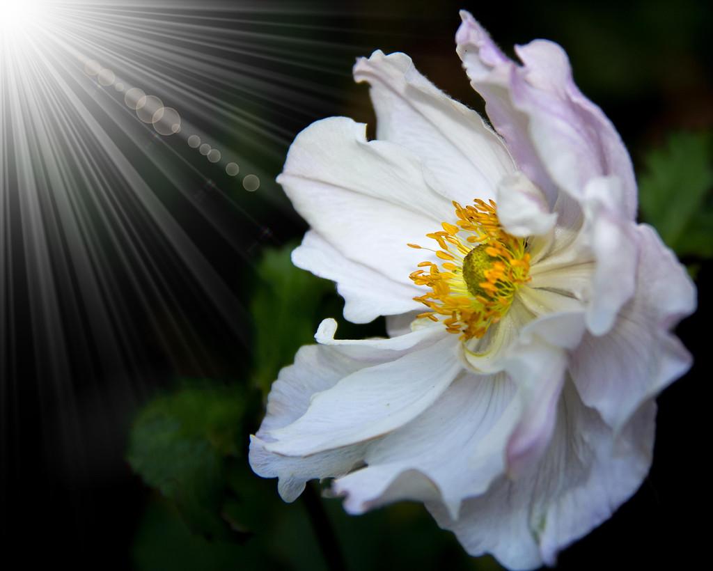 Shine A Light  by hazydaze