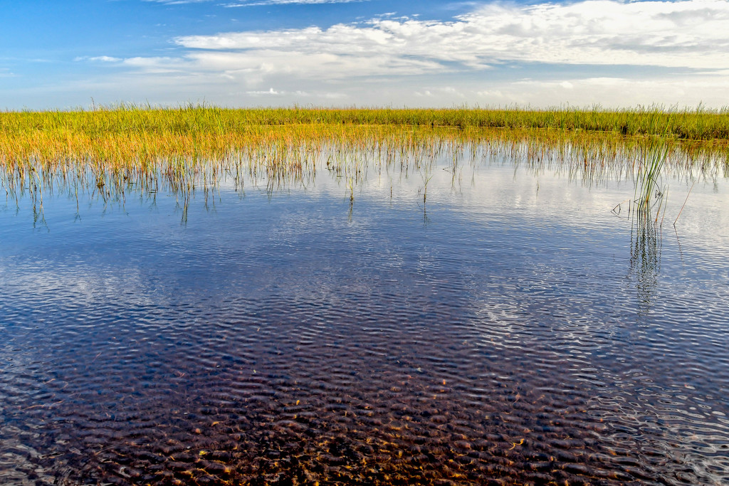 More Everglades by danette