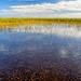More Everglades