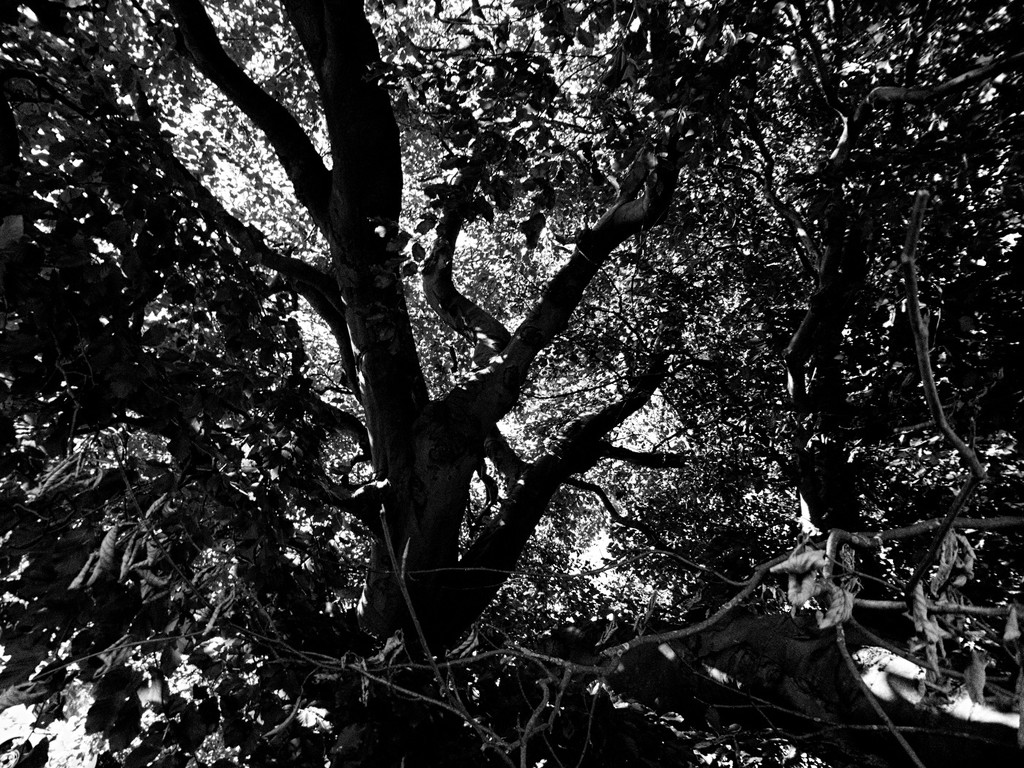 Branches by allsop
