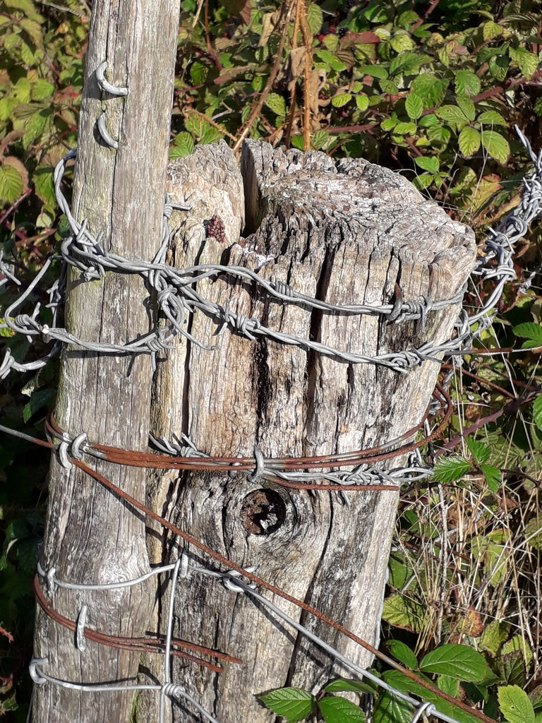 Wire and Wood by fbailey