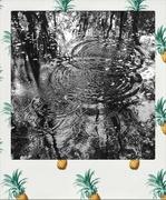 11th Sep 2019 - Raining pineapples