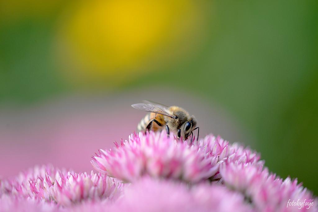 Busy as a BEE! by fayefaye