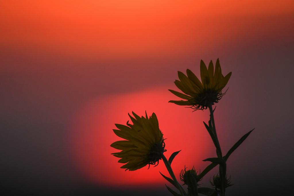 Orange, Pink, and Yellow - a Kansas Sunrise by kareenking