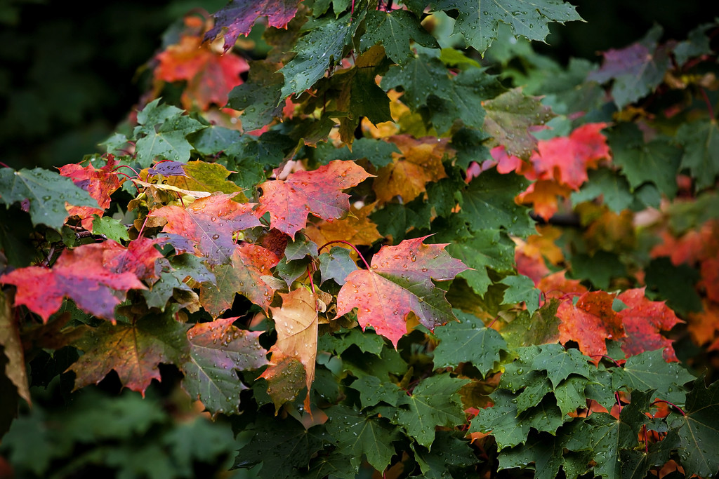 Changing colours by kiwichick