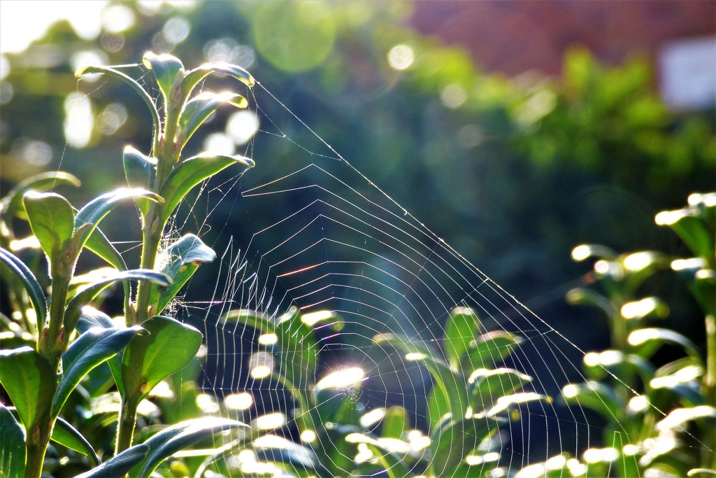 Cobwebs and bokeh  by beryl