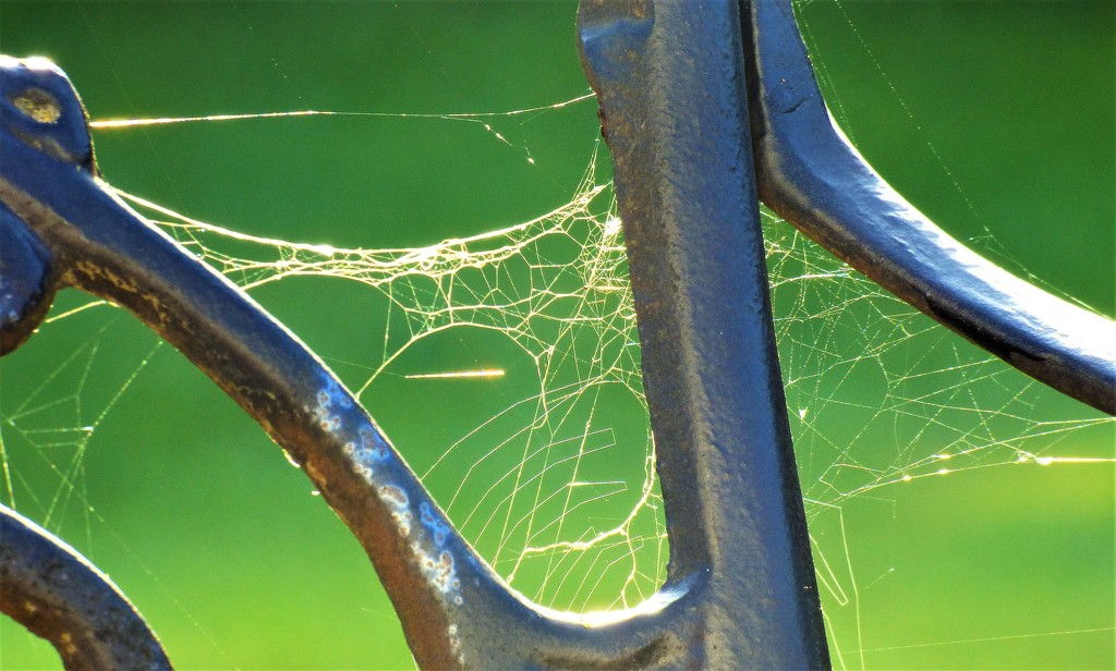 Still chasing cobwebs  by beryl