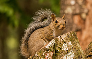 19th Sep 2019 - Another Squirrel on the Trunk!
