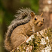 Another Squirrel on the Trunk! by rickster549