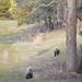 Wandering Lambs