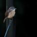 Sweet little bird on a wire by mittens