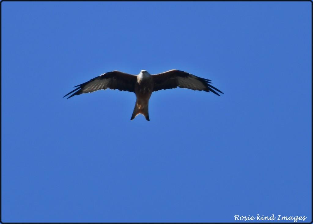 RK3_0945  Flying high by rosiekind