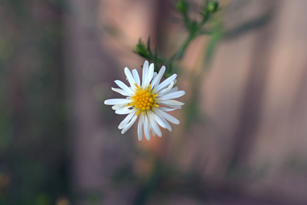 Tiny Flower by homeschoolmom
