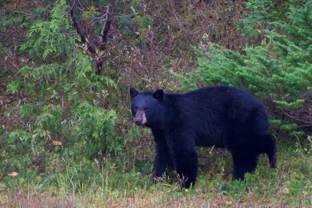 We Saw A Bear DSC_9485 by merrelyn