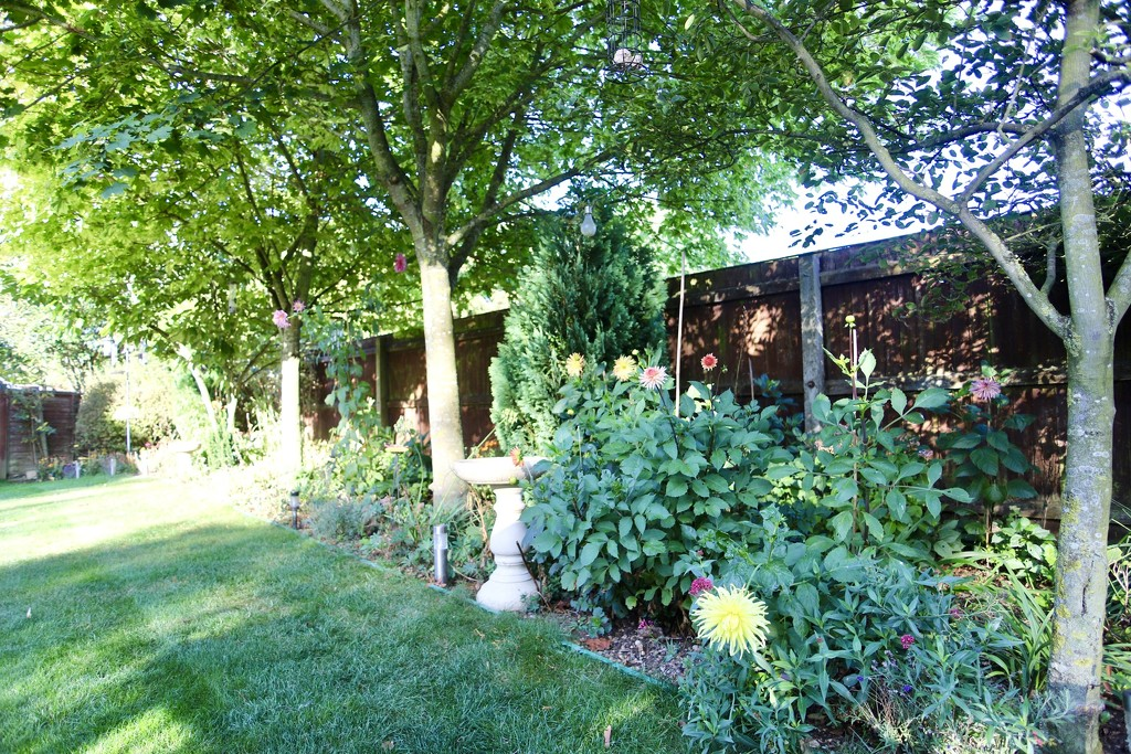 My Garden September 2019 by phil_sandford