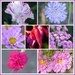 From Cosmos to Carnations