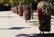 """21st Sep 2019 - Mobile """"little gardens"""" :-)"""