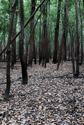 21st Sep 2019 - Dark Woods
