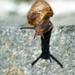 Snail - 2 by yaorenliu