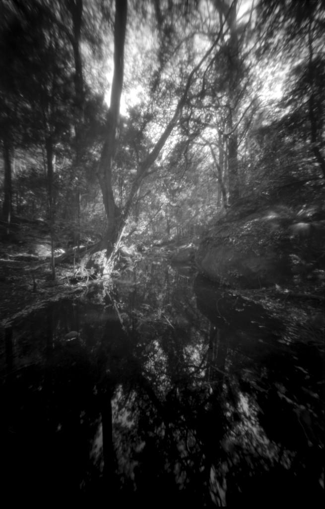 Rainforest brook by peterdegraaff
