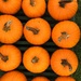 Pumpkin Season in New England