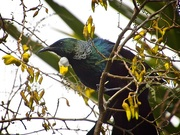 13th Sep 2019 - Just another Tui