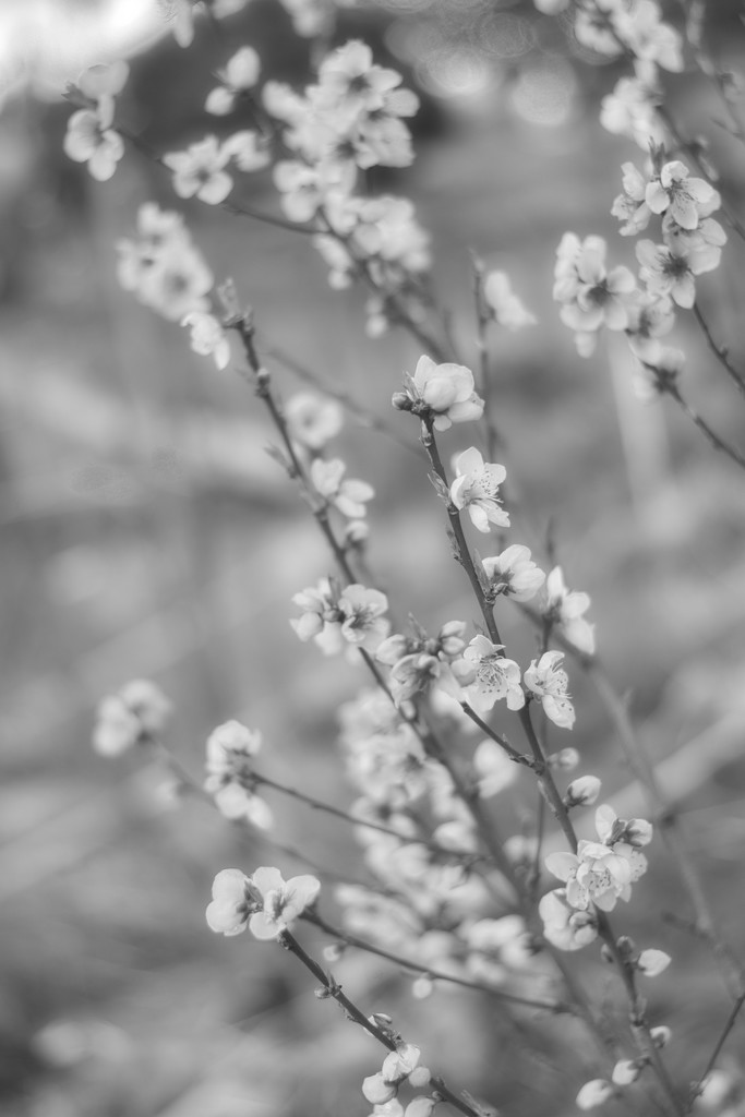 Black & White Bloom by kgolab