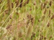 22nd Aug 2019 - Grasses