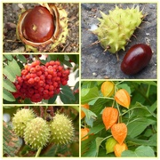 24th Sep 2019 - Fruits of Autumn