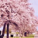 Springtime by maggiemae