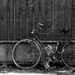 abandoned bike by caterina