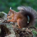 I found a nut! by mave