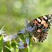 Sipping on Nectar by fayefaye