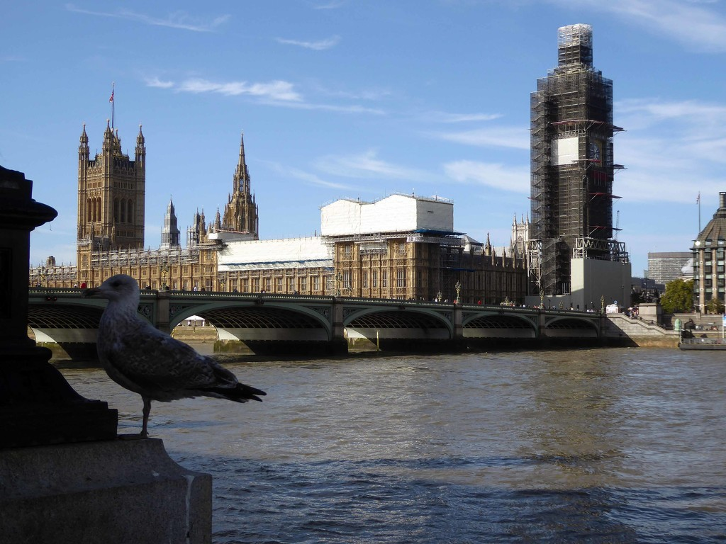 Westminster by cmp