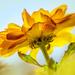 lit petals by jernst1779