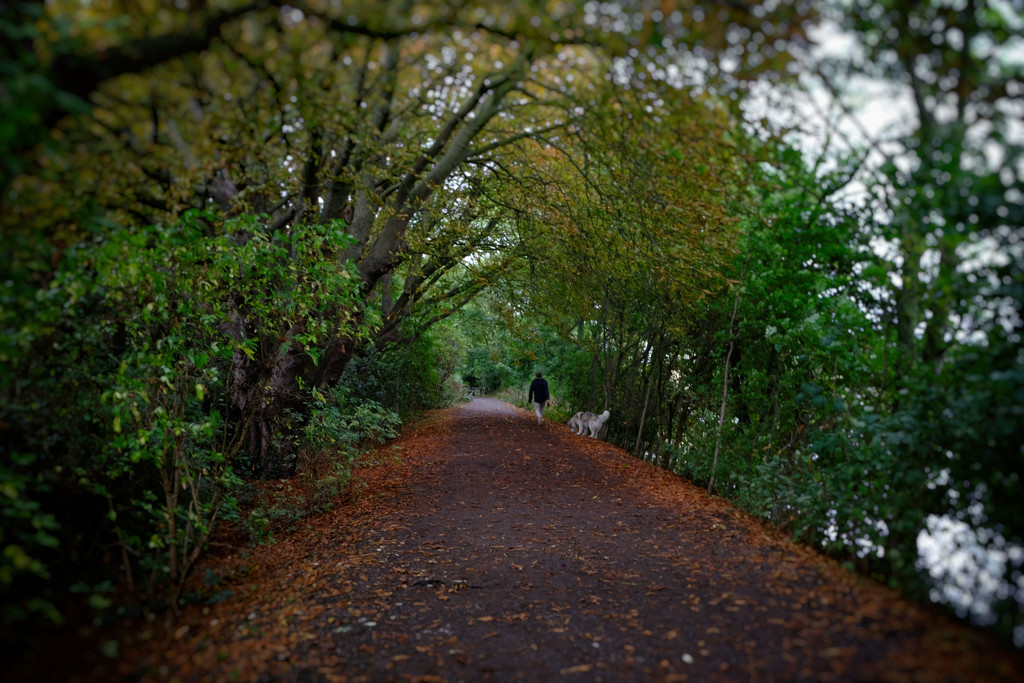 That autumnal feeling by rumpelstiltskin